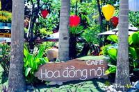 Cafe Hoa Đồng Nội
