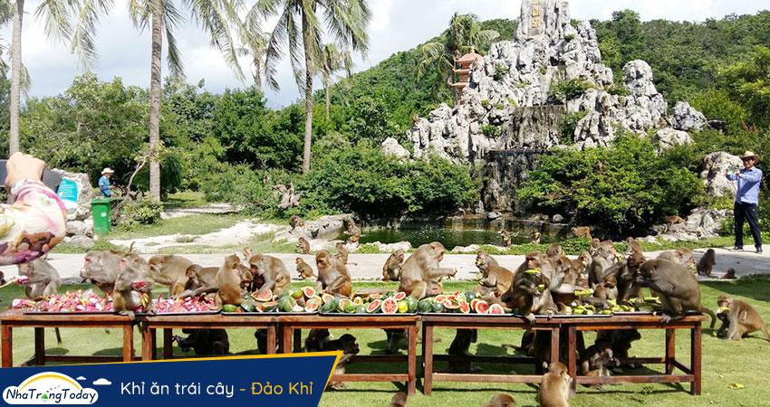 Khỉ ăn trái cây tại Hòn Lao