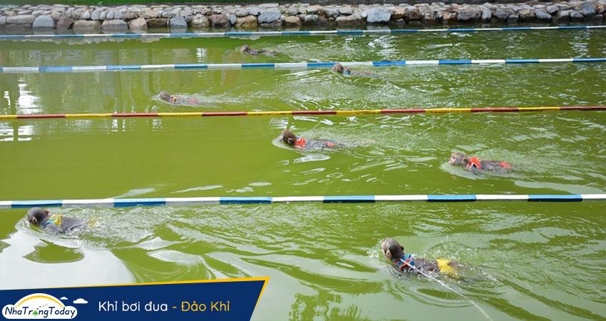 Khỉ bơi đua tại Hòn Lao