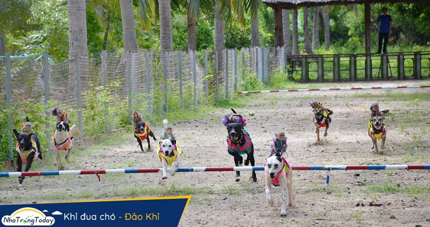 Khỉ đua chó tại Hòn Lao
