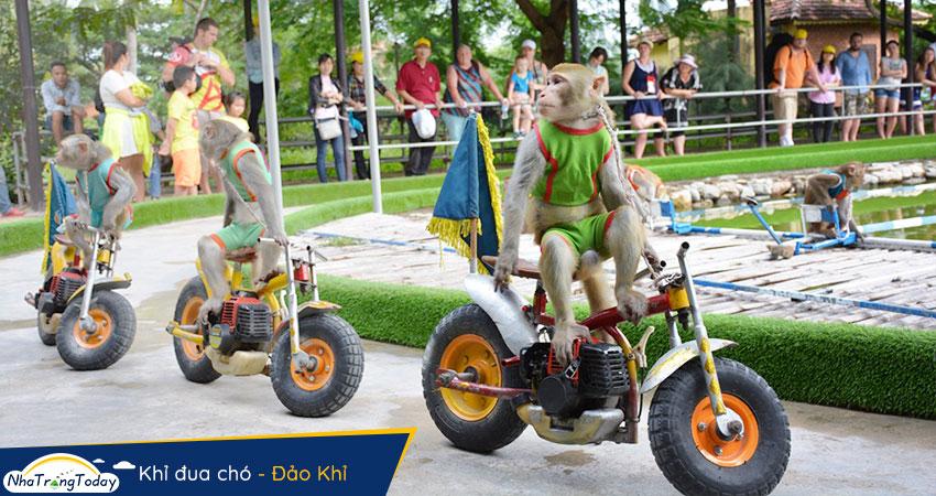 Khỉ đua mô tô tại Hòn Lao