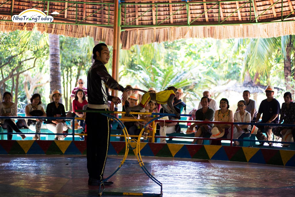 Tour đảo Khỉ + đảo Hoa Lan Hằng Ngày [2019]