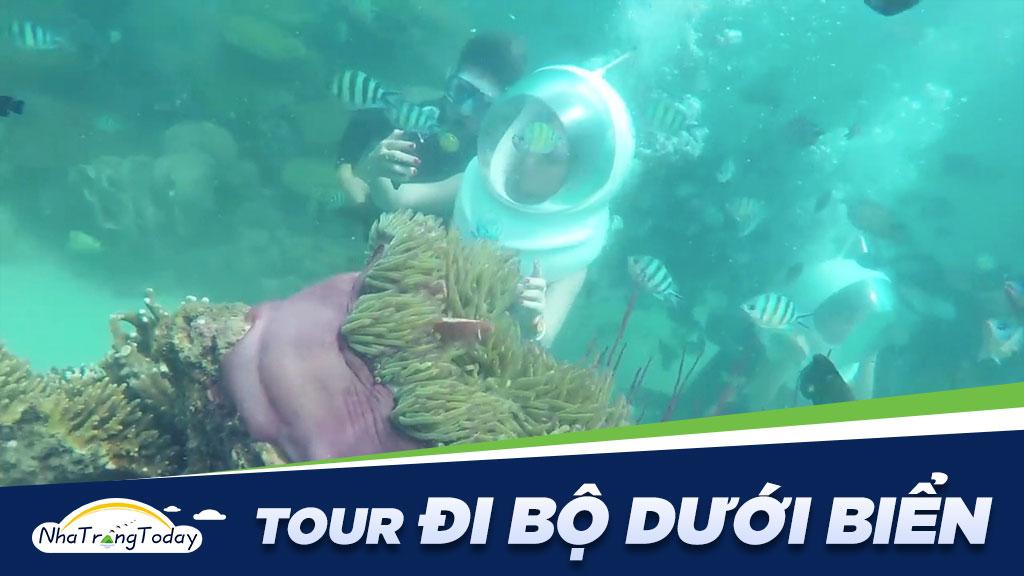 Tour đi bộ dưới biển Nha Trang Giá Rẻ - Uy Tín 2021