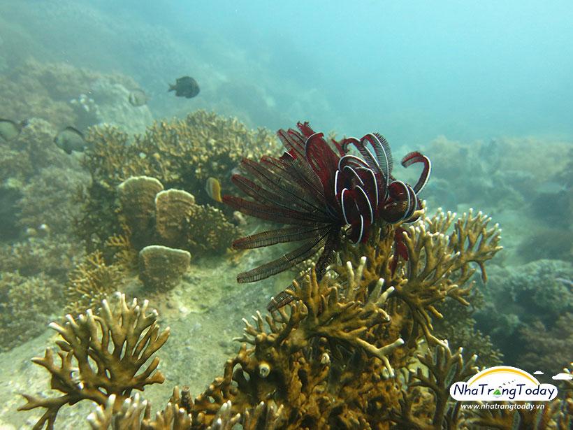 Khu bảo tồn san hô Hòn Mun Nha Trang